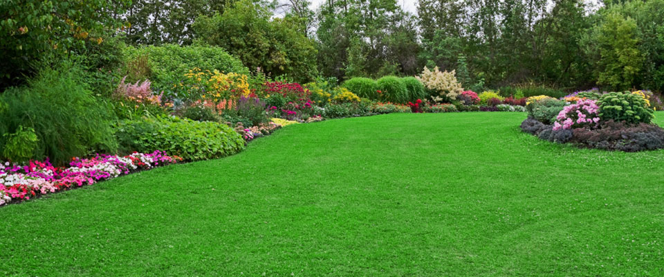 Achieving Amazing Results with Lawn Aeration
