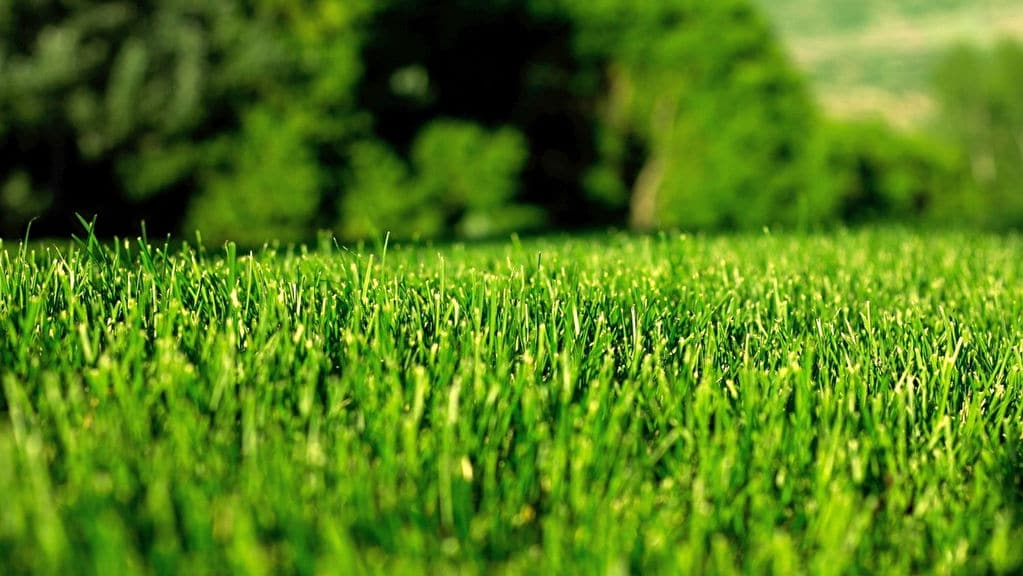 Lawn Aeration Tips and Importance of Doing it